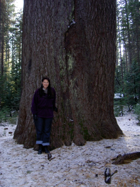 Holly and a Big Tree